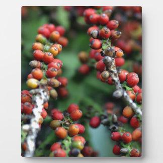 Semillas de la palma de Nikau Placas Para Mostrar