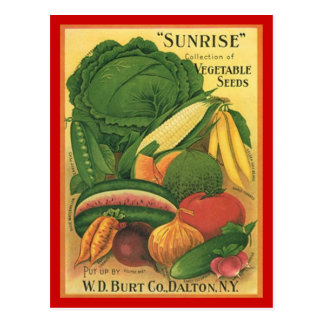 Semillas de la verdura de Burt Co de la antigüedad Postales