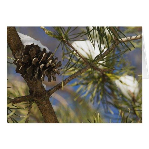 Semillas del árbol de hoja perenne felicitacion