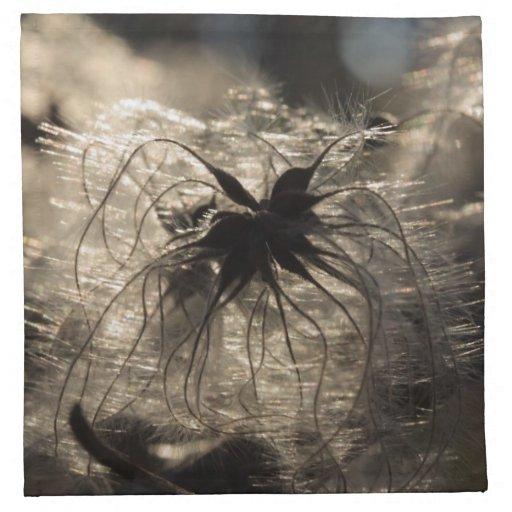 semillas del clematis servilletas