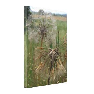 Semillas del salsifí en lona envuelta campo lienzo envuelto para galerías