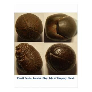 Semillas fosilizadas de la pirita postales