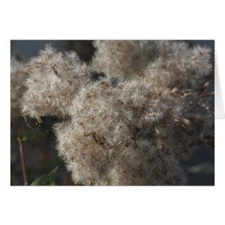 semillas mullidas del otoño tarjeta pequeña