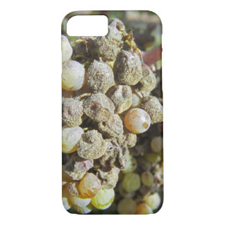 Semillon grapes with noble rot. at harvest time iPhone 7 case