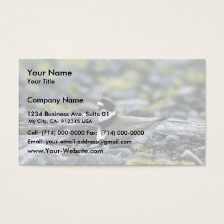 Semipalmated plover business card