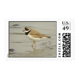 Semipalmated Plover stamp