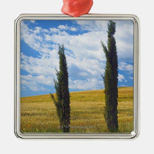 (sempervirens) del cupressus - Europa, Italia, 2 Ornamento Para Arbol De Navidad