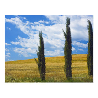 (sempervirens) del cupressus - Europa, Italia, 2 Tarjetas Postales