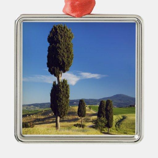 (sempervirens) del cupressus - Europa, Italia, Ornatos