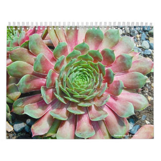 Sempervivum and Jovibarba Calendar