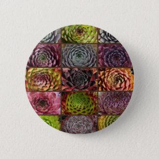 Sempervivum - Houseleek - Hauswurz - Collage Button