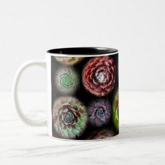 Sempervivum mug