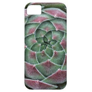 Sempervivum Ohio Burgundy iPhone SE/5/5s Case
