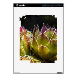 Sempervivum Plant iPad 3 Skin