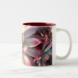 Sempervivum 'Unicorn' Mug
