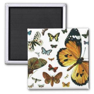 Señal anticuaria de la imagen de las mariposas col imán cuadrado