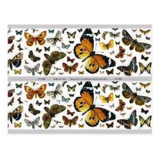 Señal anticuaria de la imagen de las mariposas col tarjetas postales
