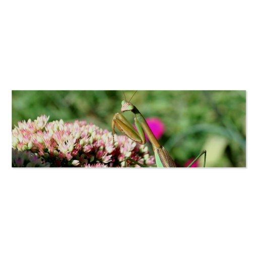 Señal de la foto de la naturaleza de la mantis tarjetas de visita mini