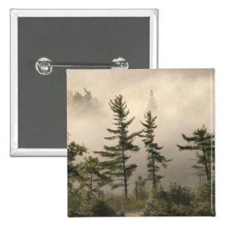 Señal de niebla del prado de la montaña pins