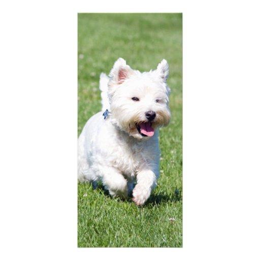 Señal del personalizado de la foto de Terrier blan Tarjetas Publicitarias Personalizadas