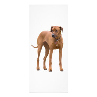 Señal del personalizado de la foto del perro de Rh Lona Publicitaria