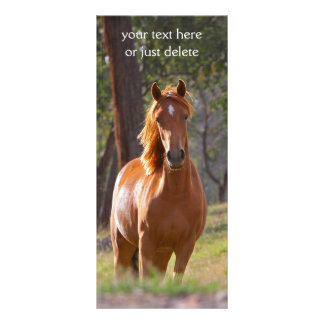 Señal hermosa de la foto del caballo de la castaña plantilla de lona