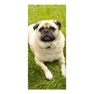 Señal linda del personalizado de la foto del perro tarjeta publicitaria