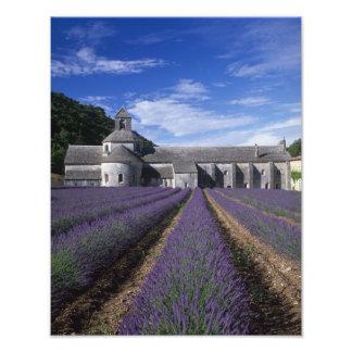 Senanque Abbey, Gordes, Vaucluse, Provence, Photo Print
