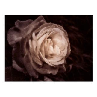 Send me a rose postcard