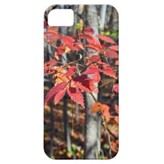Send Me On My Way iPhone SE/5/5s Case
