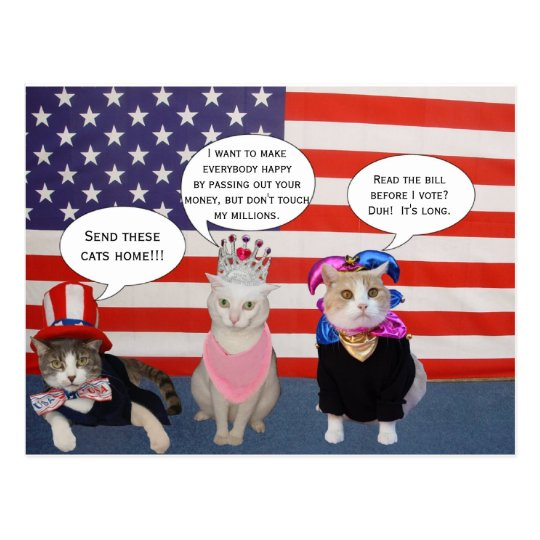 Send these cats home! postcard