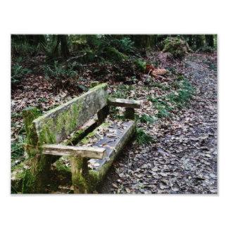 Sendero cubierto de musgo del banco en parque fotografías