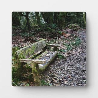 Sendero cubierto de musgo del banco en parque placas de madera