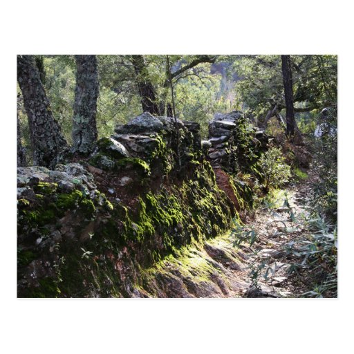 Sendero cubierto de naturaleza en la sierra tarjeta postal