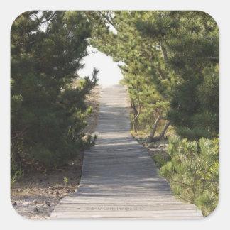 Sendero del paseo marítimo a través del árbol de colcomanias cuadradass