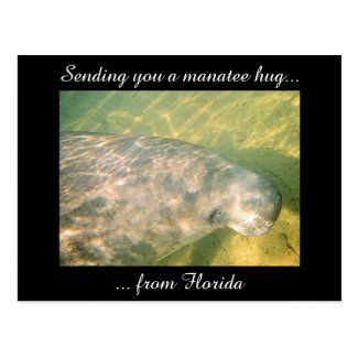 Sending You a Manatee Hug from Florida postcard