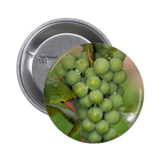 Seneca Grapes Button