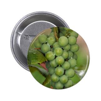 Seneca Grapes Pinback Button