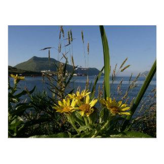 Senecio de Seabeach, isla de Unalaska Postales