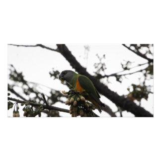 Senegal Parrot Card
