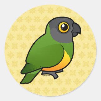 Senegal Parrot Classic Round Sticker