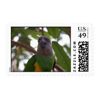 Senegal Parrot Postage