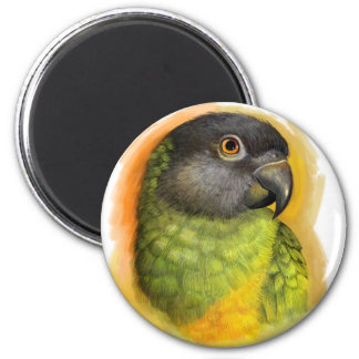 Senegal parrot realistic painting 2 inch round magnet