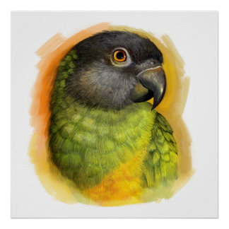 Senegal parrot realistic painting poster