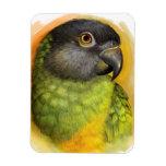 Senegal parrot realistic painting rectangular photo magnet