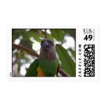 Senegal Parrot Stamps