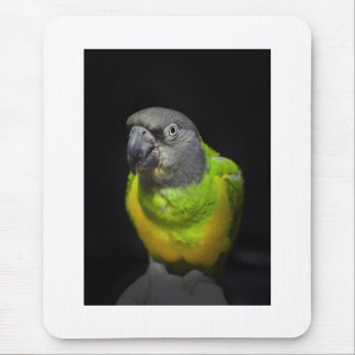 Senegal Parrot staring Teecoo Mouse Pad