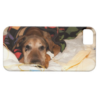 senior dog in the intensive care unit with a iPhone SE/5/5s case