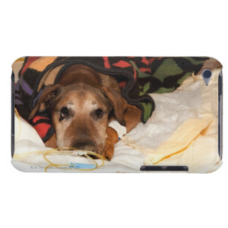 senior dog in the intensive care unit with a iPod Case-Mate case
