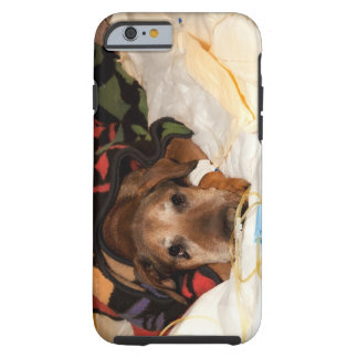senior dog in the intensive care unit with a tough iPhone 6 case